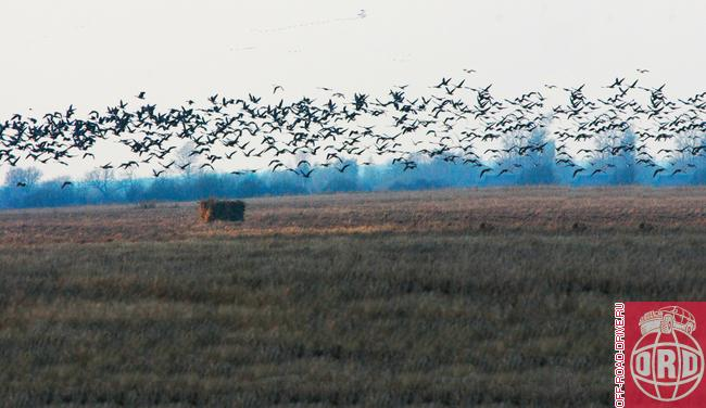 видов охоты на птицу.